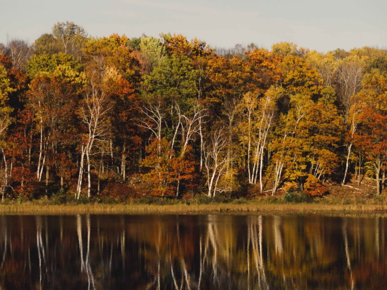 Trees in the fall near a body of water